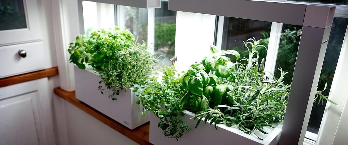 indoor plant growth help light