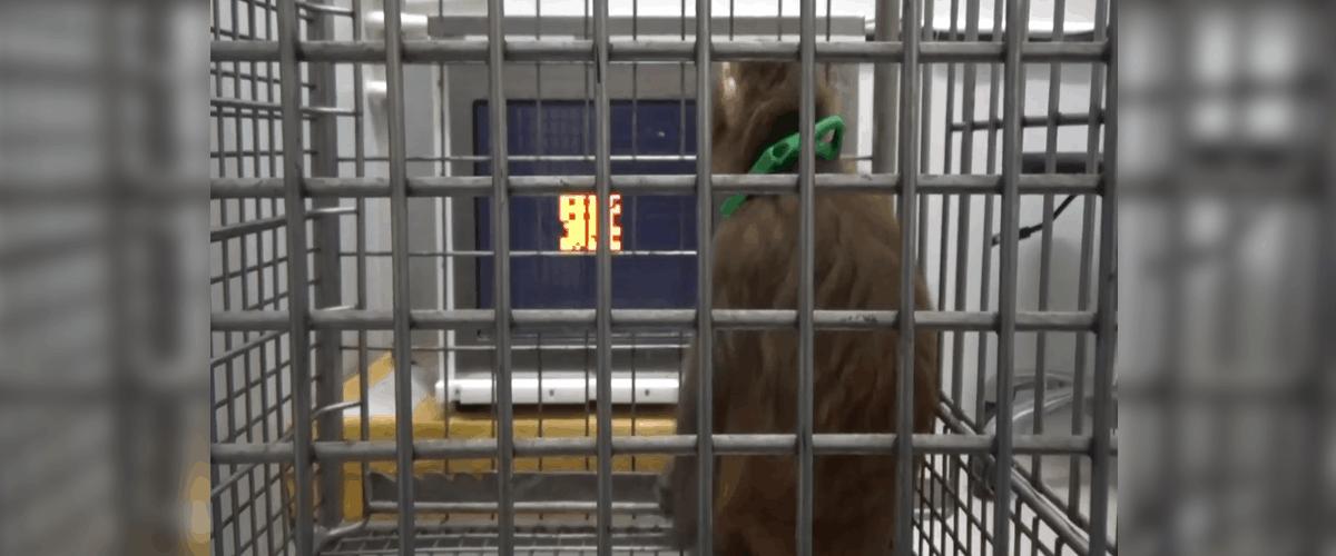 smart monkeys human genes dna