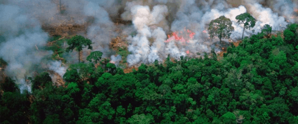 amazon rain forest fire politics president burning