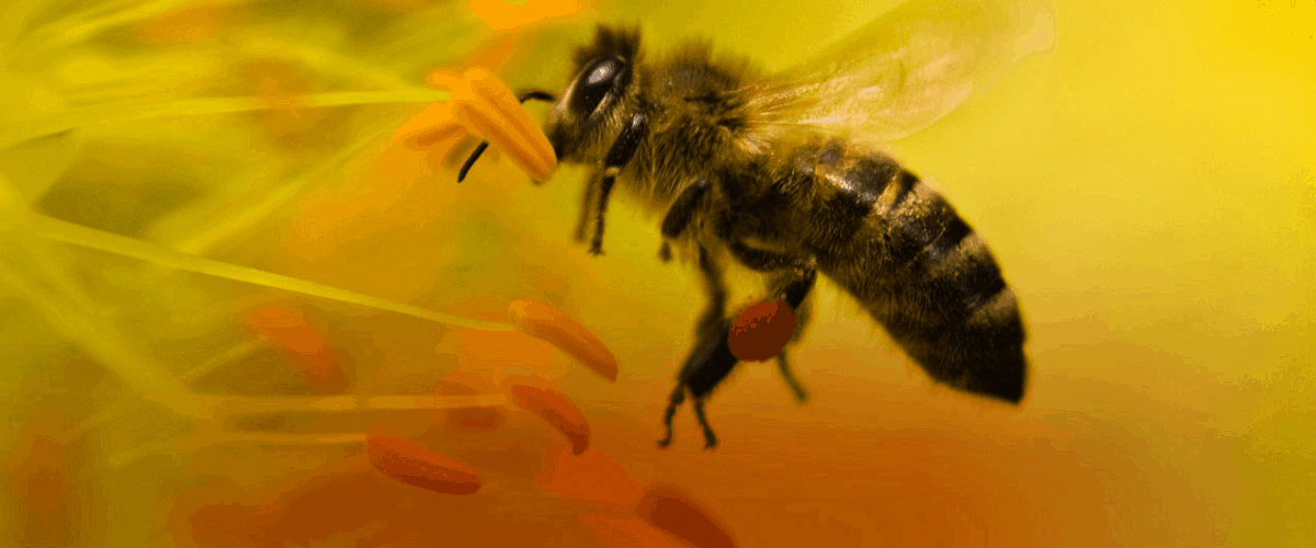 bees dying why insecticide prepper