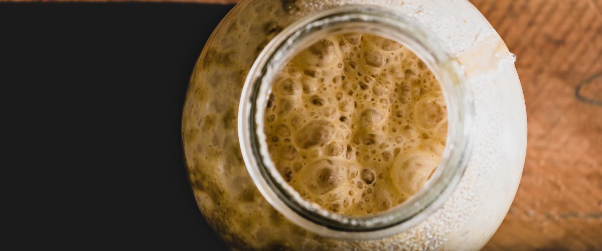 how to sourdough starter bread make yeast living wild